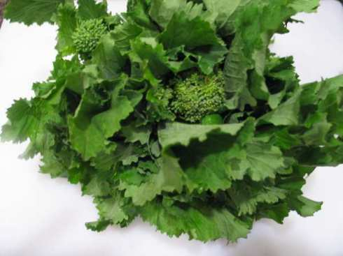 free easy green vegetable recipes broccoli rabe (displayed) savoy cabbage broccoli collard greens