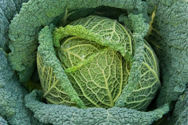 free easy green vegetable recipes broccoli savoy cabbage (displayed)broccoli rabe collard greens