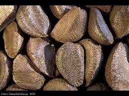 Brazil nut shell