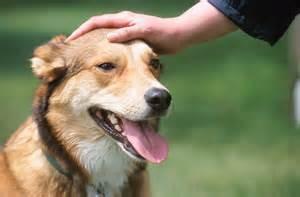 Environmental dog