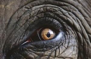 Skin animal eyes