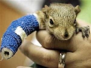 broken arm_squirrel