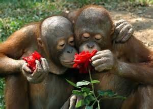 scent monkeys