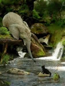 giving-elephant
