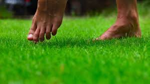nature_walking on grass