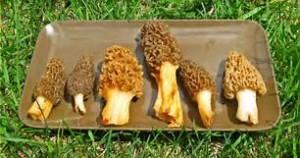 Mushrooms _sun