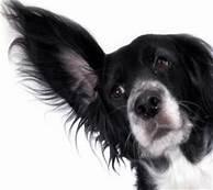 Listen-main dog