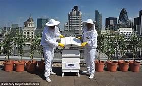 Feedback-hives